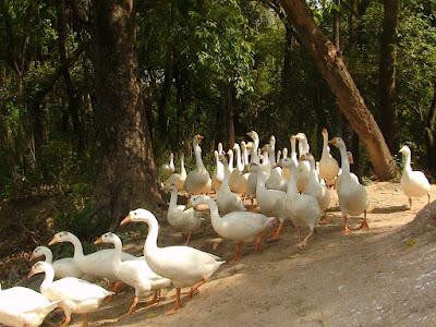 Chhatbir Zoo