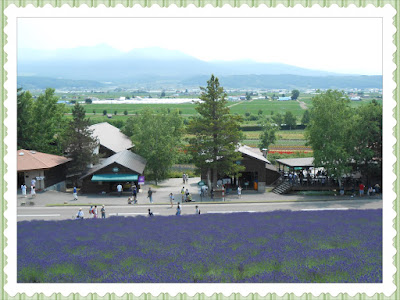 Farm Tomita Lavender 2