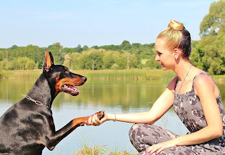 6 Dog Training Myths Debunked