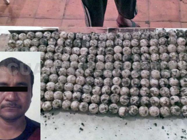 Detienen a sujeto con 219 huevos de tortuga