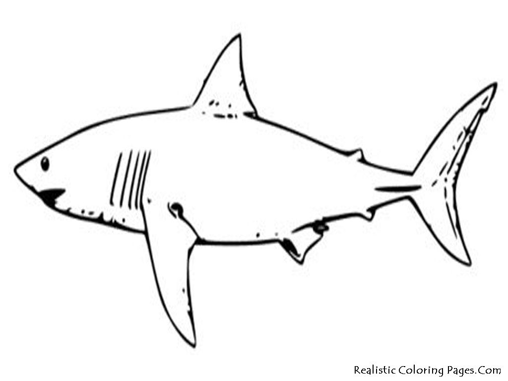 sharks coloring pages - tropical fish coloring pages realistic coloring pages