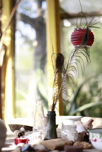 Natura morta con bottiglie e penna di pavone. Canon EF 50mm f/1.8 II a F:1.8