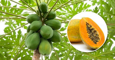 How To Include Every Part Of This Superfood Papaya In An Anti Cancer Diet