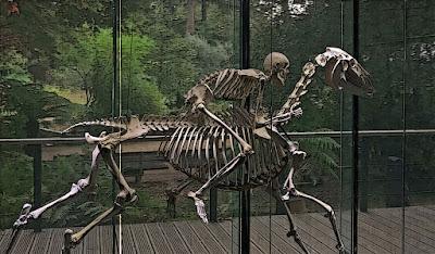 Toulouse, Muséum d'histoire naturelle