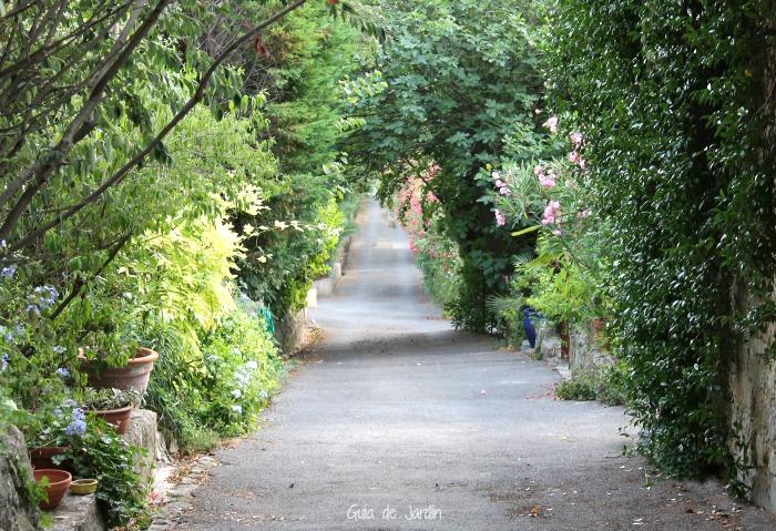 Camino de entrada visto desde la casa