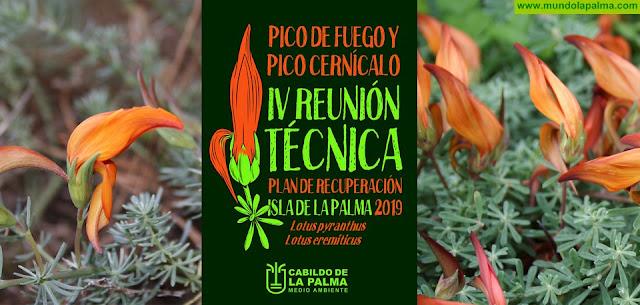 Unas jornadas técnicas abordarán el plan de recuperación que el Cabildo ejecuta con dos plantas endémicas amenazadas