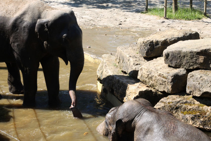 bellewaerde-parc-attraction-belgique-elephant
