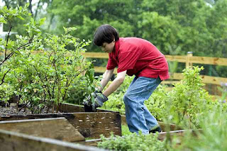 boy planting vegetable