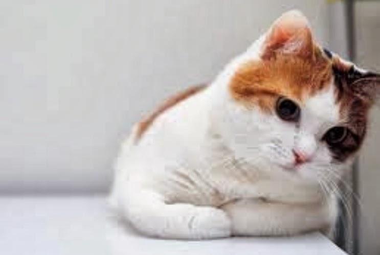 18+ Wallpaper Kucing Lucu Terbaru | Bangiz