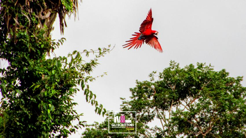Viaggio in Amazzonia: Tambo Blanquillo e ritorno a Cusco