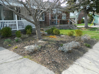 Scarborough Birch Cliff Front Yard Spring Garden Cleanup After by Paul Jung Gardening Services a Toronto Gardening Company