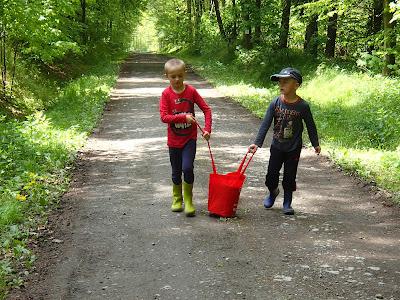 Grzyby 2017, grzyby w maju, poszukiwania pierwszych borowików, Las Bronaczowa