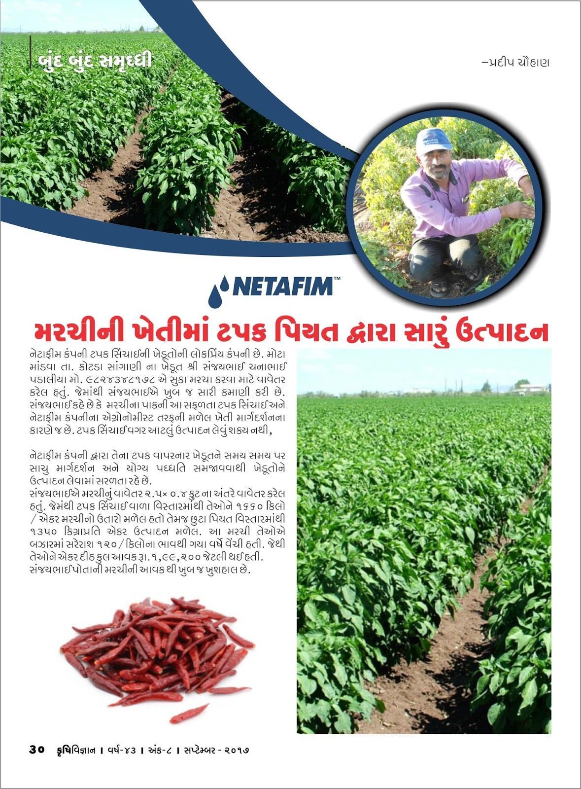 બુંદ બુંદ સમૃદ્ધિ :મરચીની ખેતીમાં ટપક પિયત દ્વારા સારું ઉત્પાદન