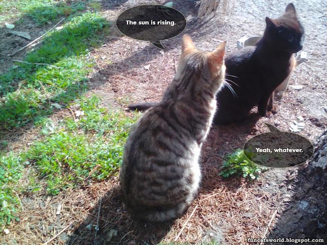 Rising Sun Cats