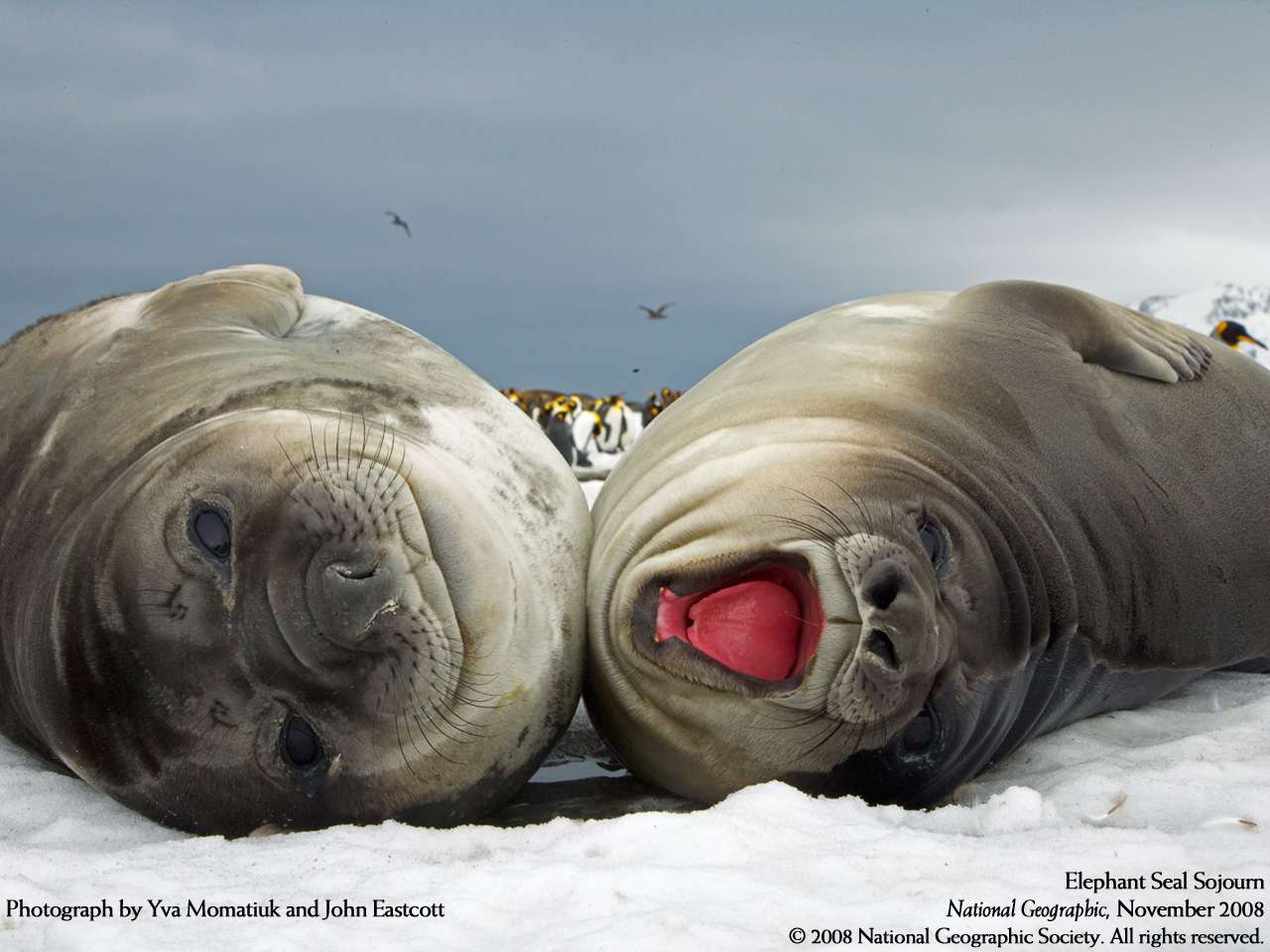 Cool Animals Pictures Cute Seal Photos