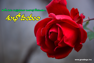 Telugu morning greetings with rose flowers,have a nice day in Telugu.