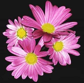 Imagenes de lindas flores color lila