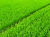Ini Lho Beda Sawah dan Ladang