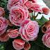 Flores precisam de cuidados especiais nas estações mais frias