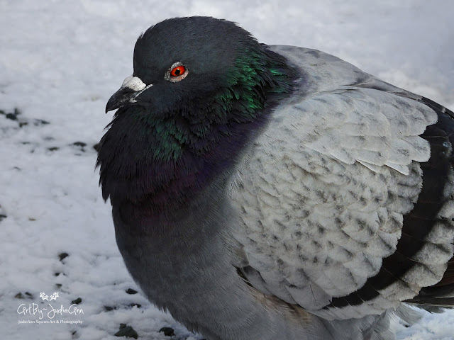 19 Pretty Pigeon Photos for 2019 + Video