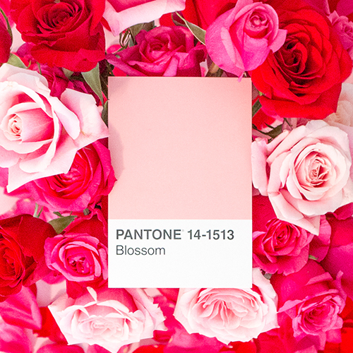 Pantone Bouquet in Bloom by Katelyn Wood on Instagram: LLKCake