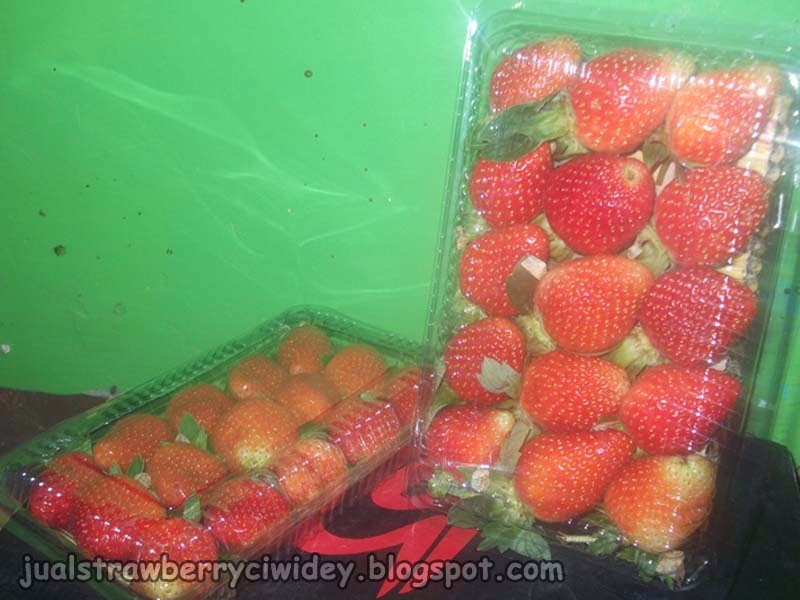 Jual strawberry segar grade A
