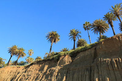 California Incline Palm Trees in Santa Monica, CA - Photo by Mademoiselle Mermaid