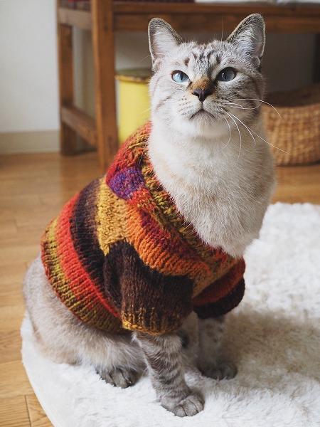 赤・オレンジ・茶・からし色など秋らしい色が段染めになった猫用セーター