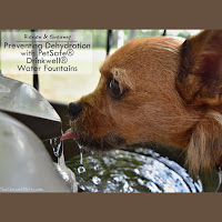 Review & Giveaway: Preventing Dehydration with PetSafe® Drinkwell® Water Fountains