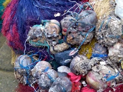 23 human skulls 'found in shrines' of Niger Delta militants