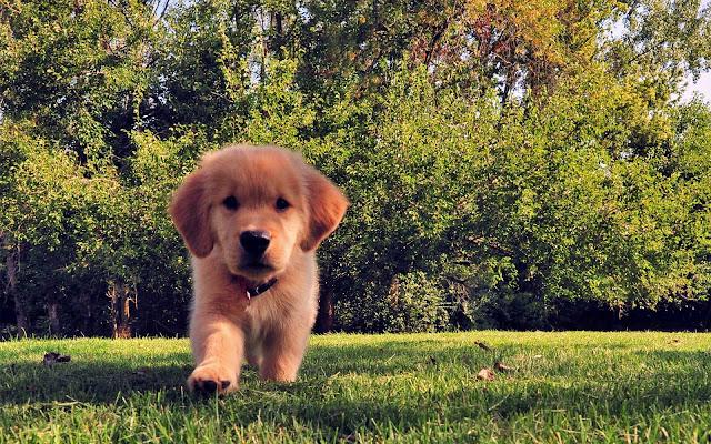 Hond op het gras in de tuin