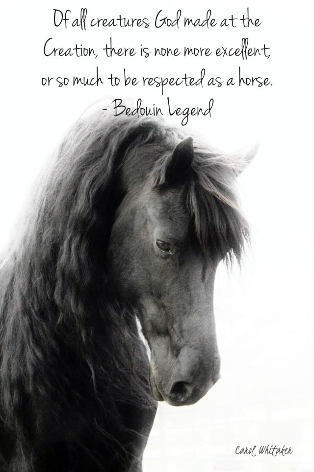Horse Quotes Motivational Quotesgram