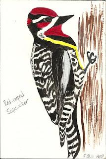 Burroughs Audubon Meeting