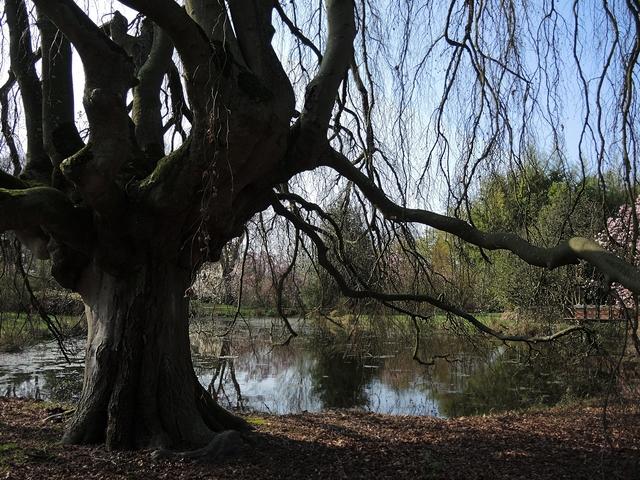 Bloesems en gezoem in het arboretum van Kalmthout