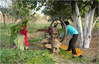 Farm activities at Nirvana organic farm near Jaipur, Rajasthan