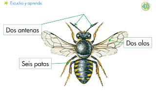 http://primerodecarlos.com/SEGUNDO_PRIMARIA/diciembre/Unidad5/actividades/cono/aprende_anfibios.swf
