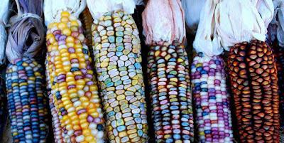 El término raza maiz
