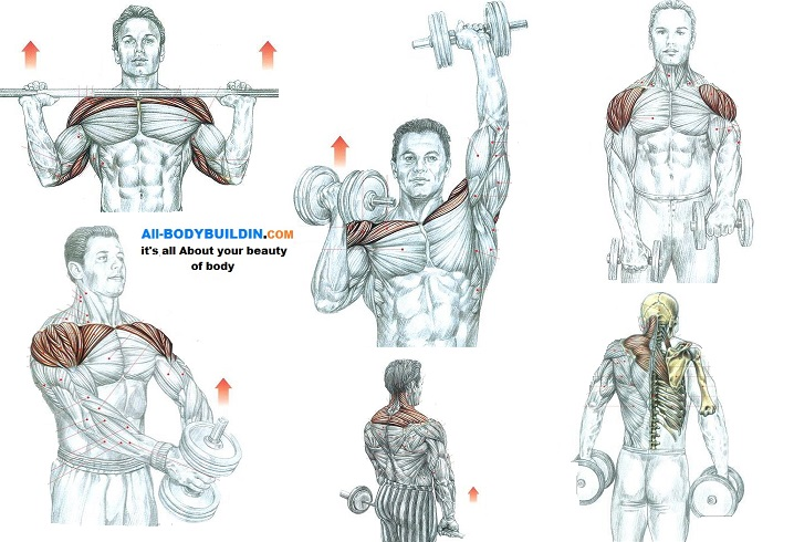5 Awesome Shoulder Muscle Exercises