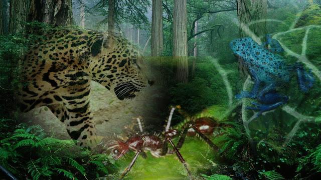 حيوانات الأمازون