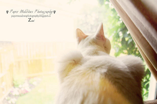Paper Meadows Photography Blog-Zai -Cat Photography-Pets
