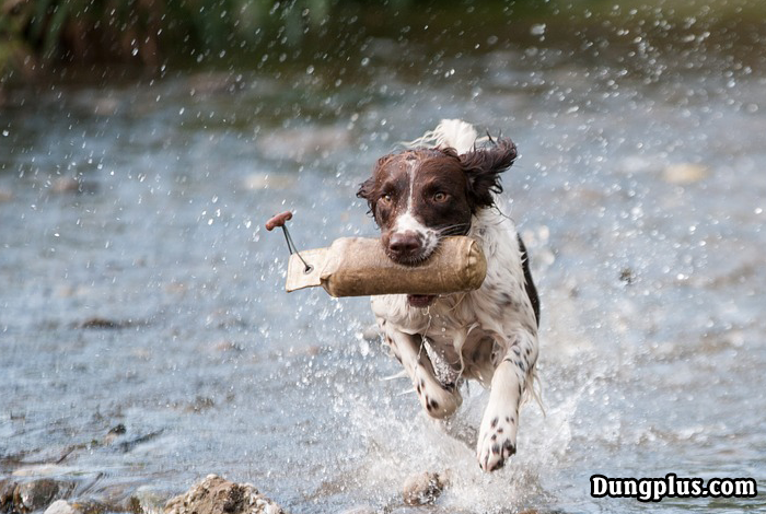Chó huấn luyện