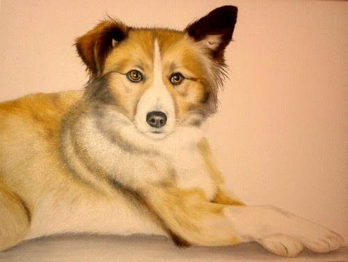 Pet Portrait Welsh Collie Dog