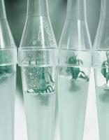 βλαστοκύτταρα καινοτομία που χρησιμοποιεί η Oriflame για την αντιγήρανση