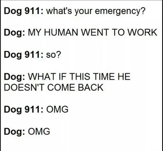 Funny Dog 911 Emergency Joke Picture