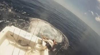 Γιγάντιο ψάρι εισέβαλε σε σκάφος – Κατατρόπωσε τους ψαράδες [Βίντεο]