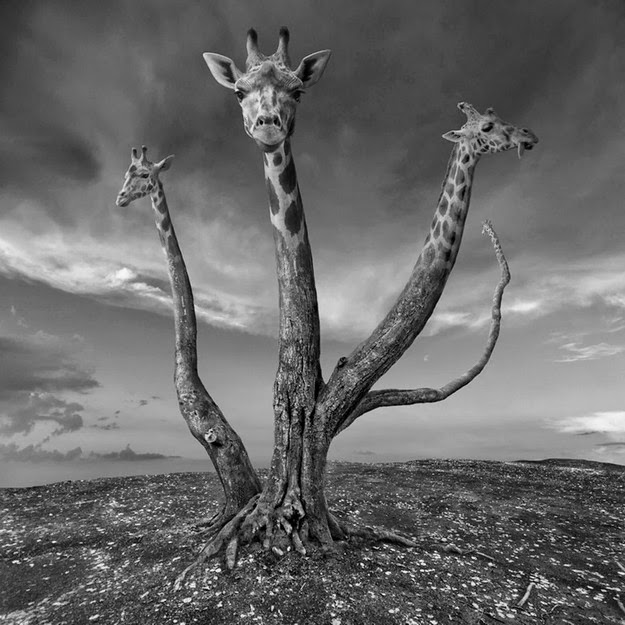 Surreal Black and White Photo Manipulations by Dariusz Klimczak