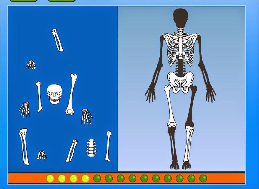 http://www.cyberkidz.es/cyberkidz/juego.php?spelNaam=Esqueleto%20rompe%20cabezas&spelUrl=library%2Fwetenschap%2Fgroep3%2Fwetenschap1%2F