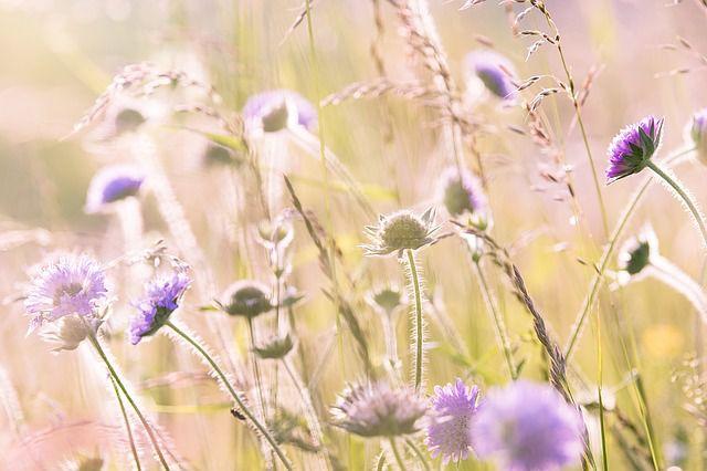 hoa dại đẹp nhất 12