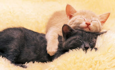 Cats+Hug.jpg