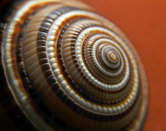 Fractals on a shell